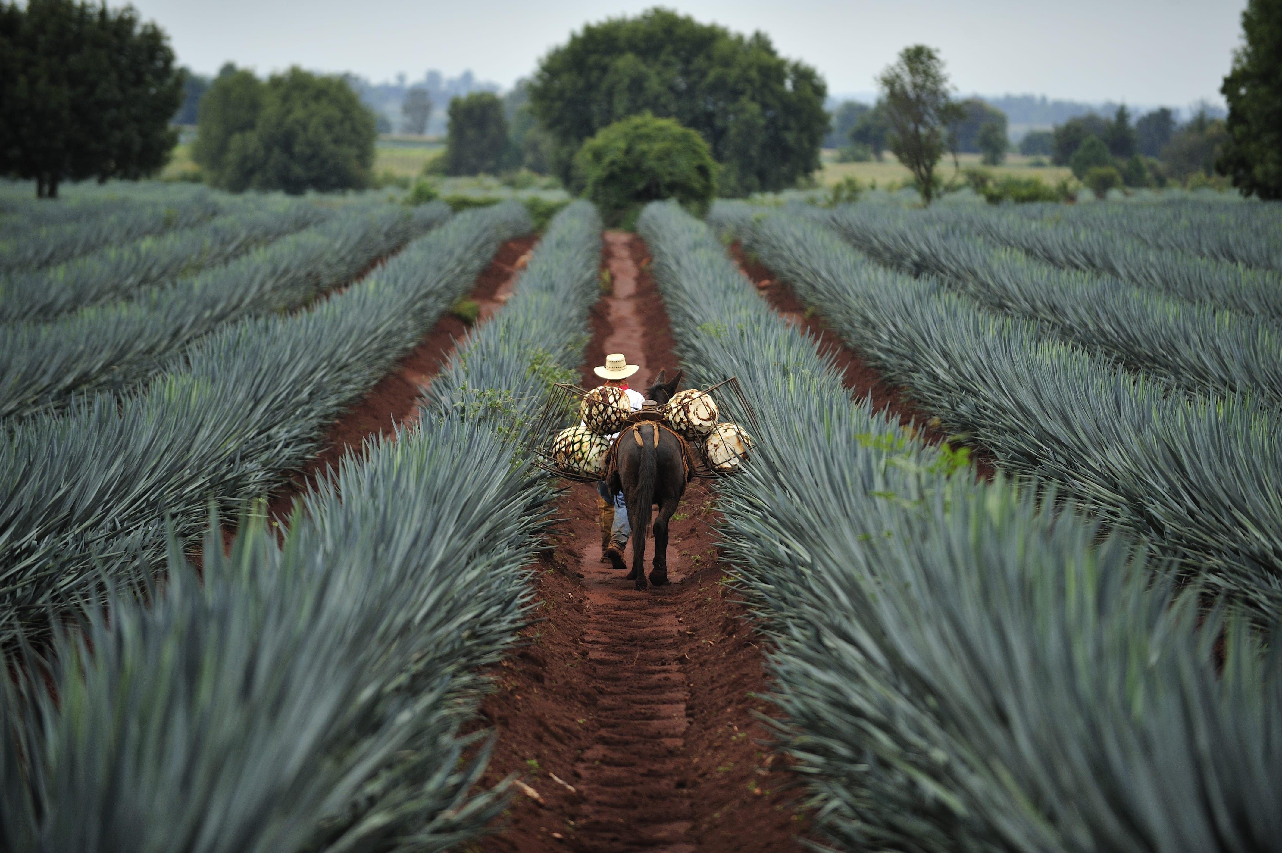 image Le Mexique, pays de la Tequila