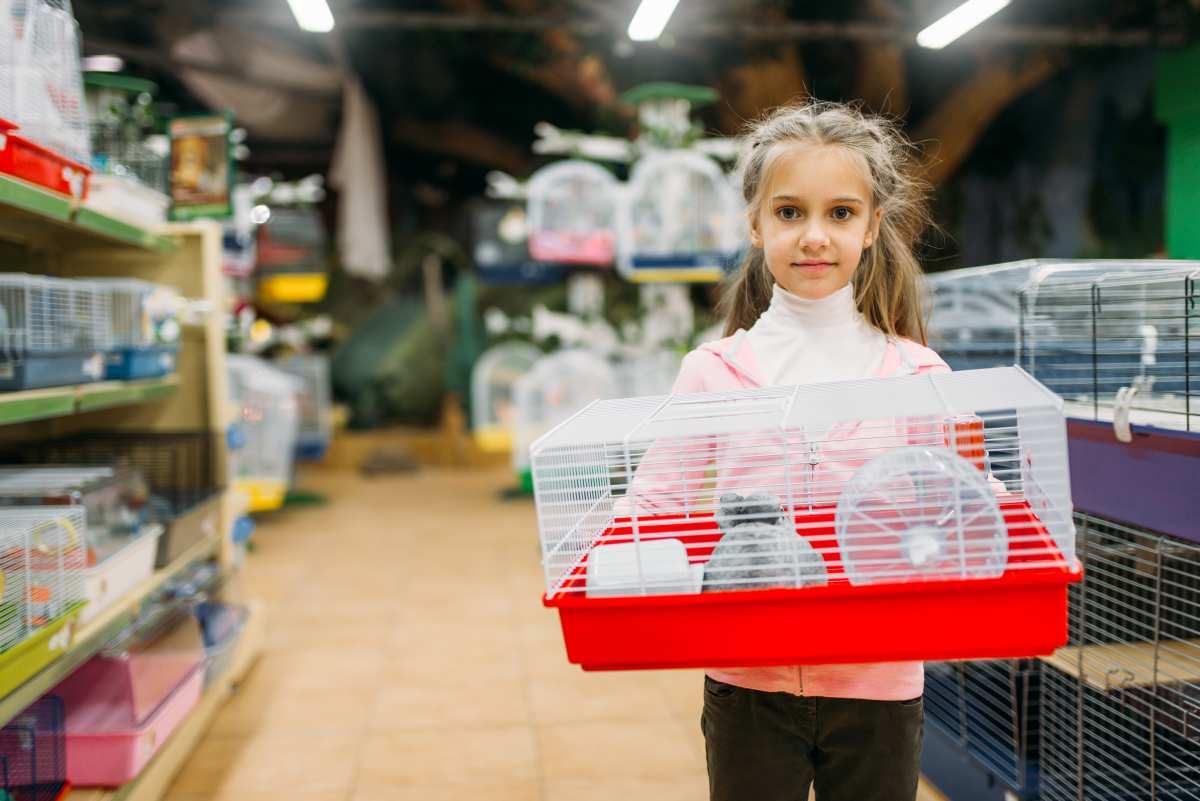 image Quels matériels et accessoires pour hamster ?