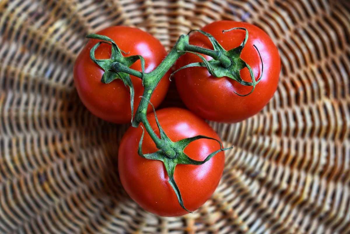 image 10 conseils pour réussir la culture de vos tomates
