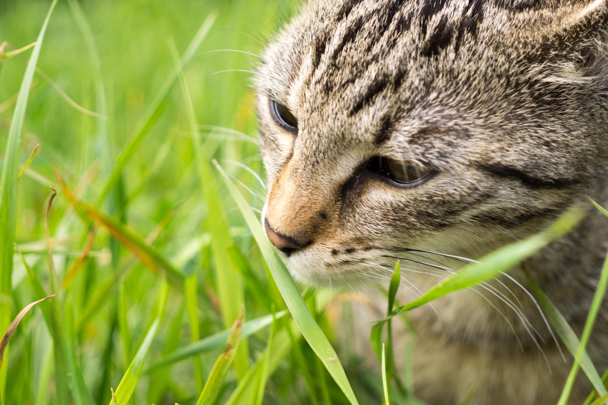 image Comment éloigner le chat du jardin ?