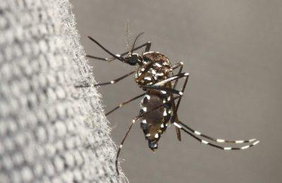 Comment lutter contre le moustique tigre ? Le guide complet