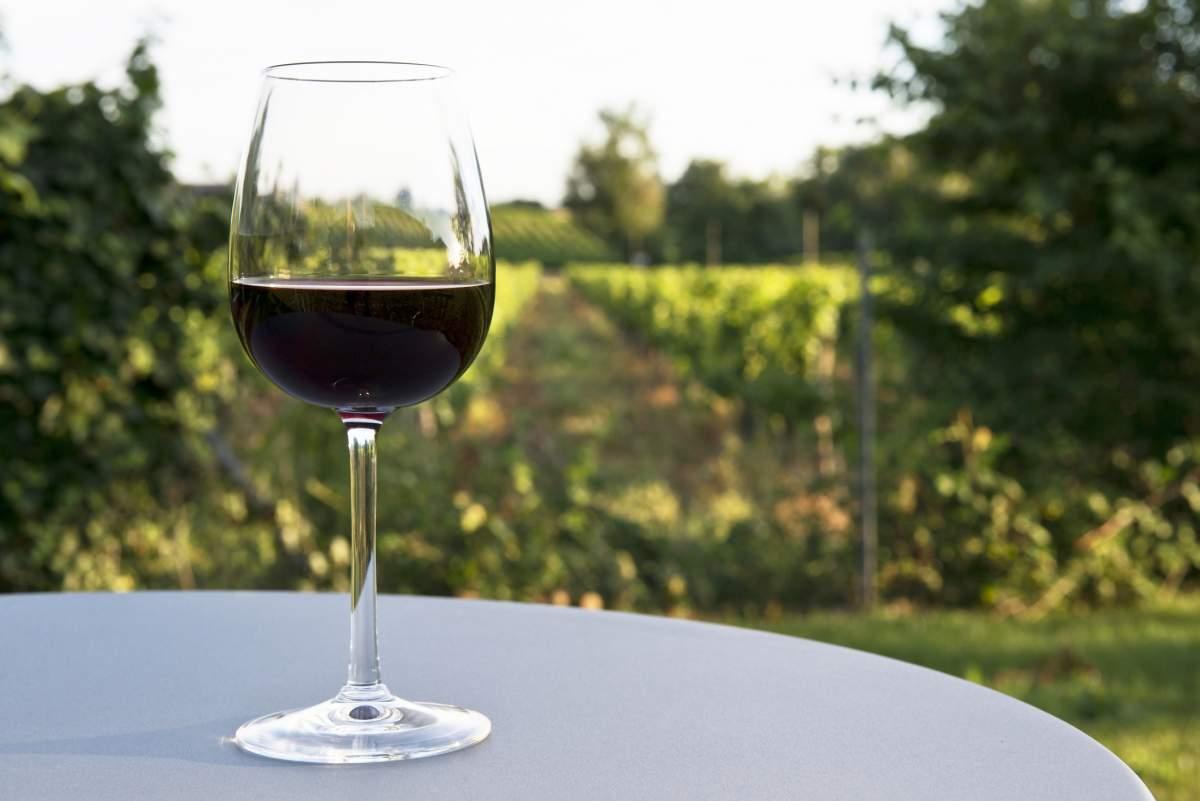 image Zoom sur l'AOC Pauillac, le Bordeaux par excellence