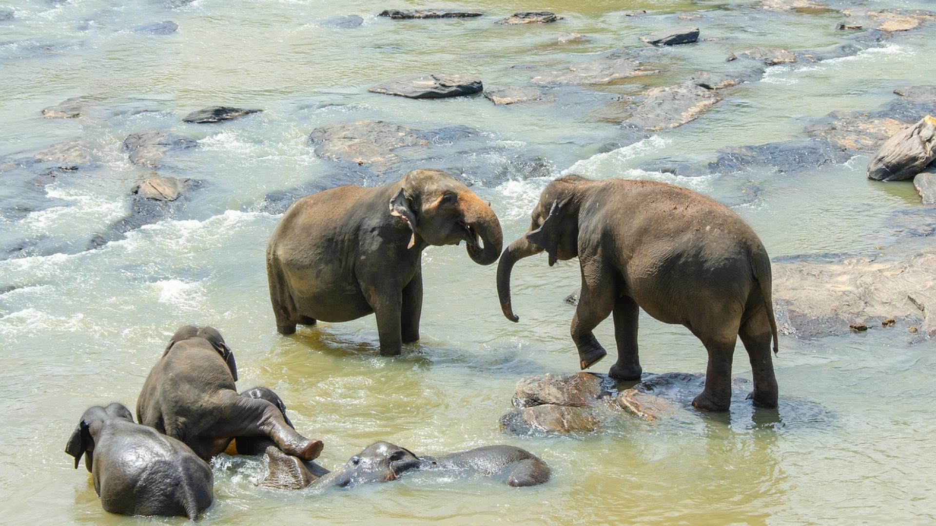 image Le Sri Lanka, une destination asiatique pleine de charme